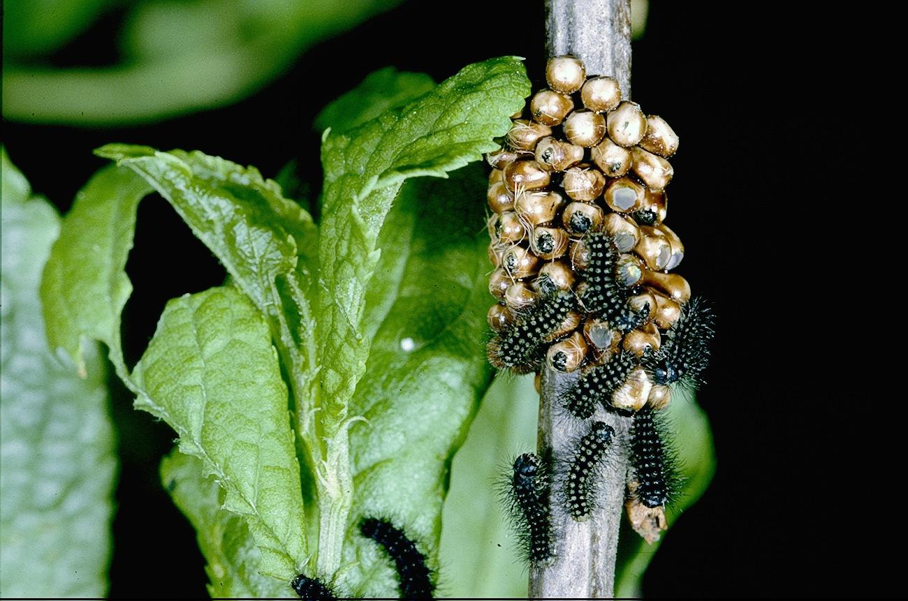 Ekologiczne środki ochrony roślin